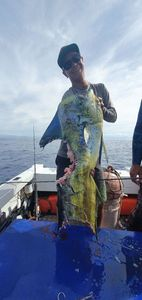 Dolphinfish