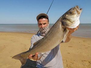 European Bass — surfcasting lx