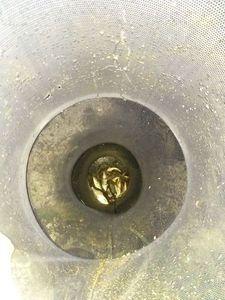 Roach — Irie Vibration