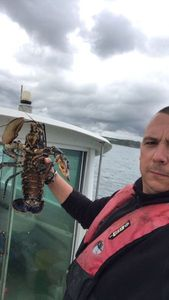 European Lobster — arnaud Bouquin