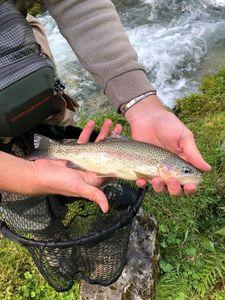 Rainbow Trout — Charles Testut