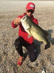 Largemouth Bass — Samy Bleicher