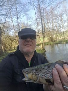 Brown Trout — Thierry Onraita