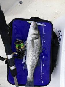 European Bass — FX Charier