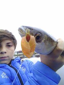Thinlip Grey Mullet — raf_ fishing