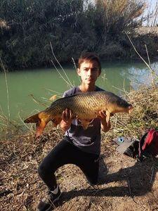 Common Carp — Nathan Bres