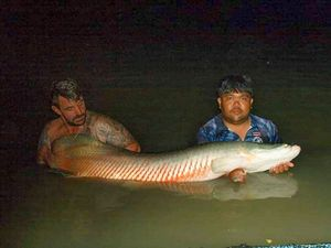 Arapaima — french strikefishing