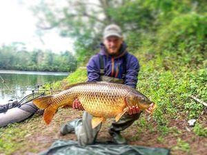 Common Carp — Alexandre Cvetanovic