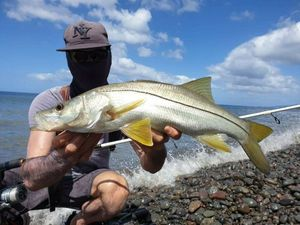 Common Snook — Guillaume pêche Guadeloupe