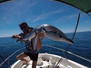 Requin Bleu (Peau Bleue) — Jordan  Decomps