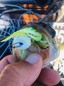 Black Bass (Achigan à Grande Bouche) — Olivier fisherman