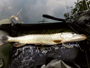 Northern Pike — bi nome