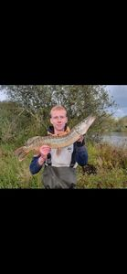 Northern Pike — Demeestere Brice