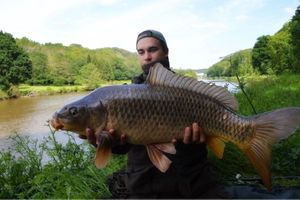 Common Carp — Fanatick Fisher
