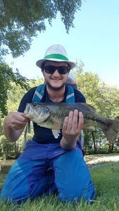 Largemouth Bass — Shadow 33