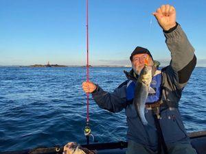 European Bass (Seabass) — PatDom HANAT