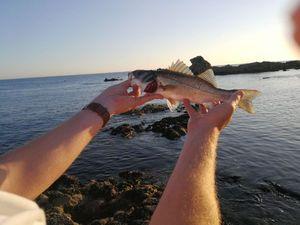 European Bass (Seabass) — Polo Duf