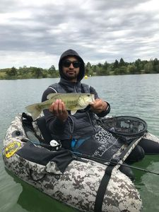 Black Bass (Achigan à Grande Bouche)