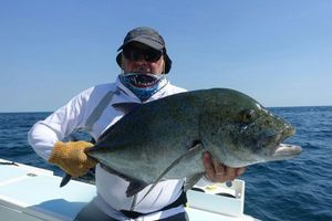 Blue Spotted Trevally — Patrick Bouland