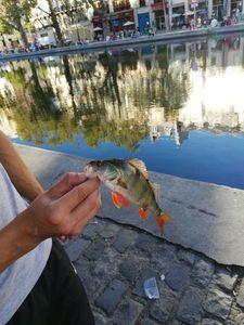 European Perch — Valentin FishingBuffs