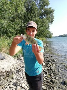 European Perch — Natan Ailloud Buthion