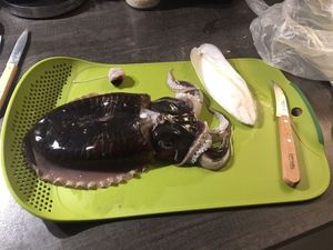 Common Cuttlefish — Nicolas Di Lenarda