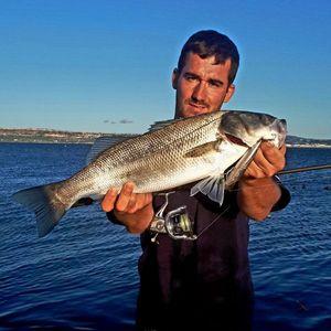 European Bass — Dentichon Pêche