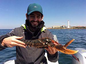 European Lobster — David Barbeau
