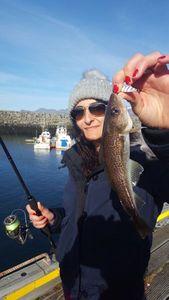 Atlantic Cod — Charlie Astier