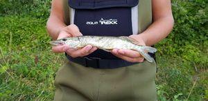 Northern Pike — Ianis_fishingbuffs