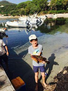 Brown Grouper — Côme rockfishing