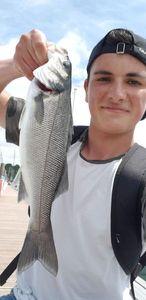 European Bass (Seabass) — Matt cdl