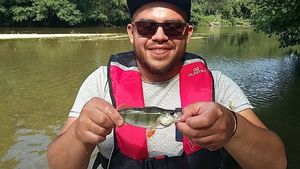 European Perch — Kevin Ocampo