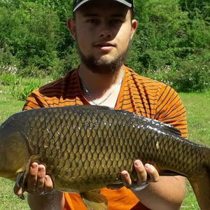 Common Carp — Romain Lachize