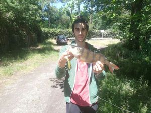 European Perch — Corto Oliva