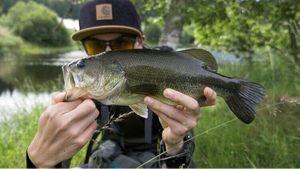 Black Bass (Achigan à Grande Bouche) — Thomas Granjon