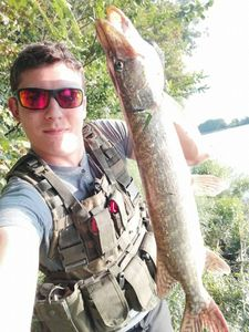 Northern Pike — Guillaume Crn