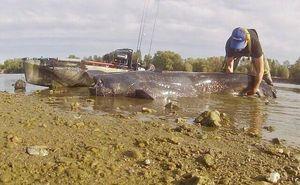 Wels — Franck Kayak Fishing