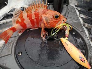Redfish — David Guilloteau