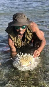 Spot-Fin Porcupinefish — Chonch Cincinaty