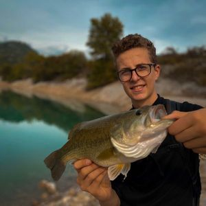 Largemouth Bass — Gabriel Daumas