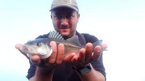 European Bass (Seabass) — Cédric  RÉAU