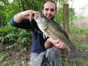 Largemouth Bass — David Debrie