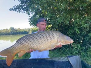 Common Carp — Arno Czl
