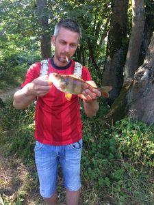 European Perch — Nikos BROC