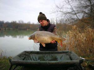 Common Carp — Rod CarpAngler