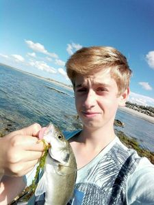 European Bass (Seabass) — Nicolas Travert