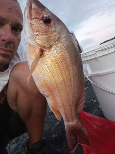Blacktail Snapper — Yoann Pirrone