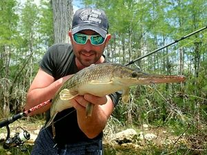 Florida Gar — jimmy Maistrello