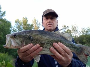 Largemouth Bass — patrick j